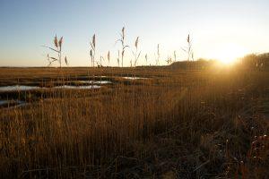 Barn Island Marsh