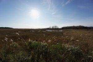 Barn Island Marsh View