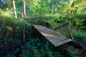 Decaying Bridge at Blackwell Brook
