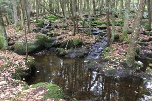 Diana's Pool Trailview