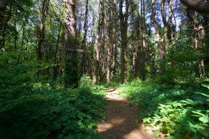 Doris Chamberlain Percy Cook Trail