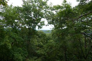 Narrow View from the Shenipsit
