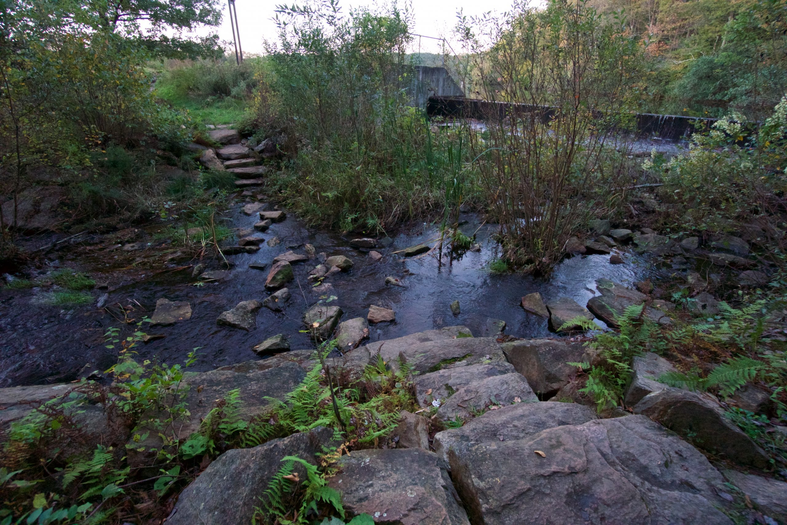 Risley Pond Outlet Stream