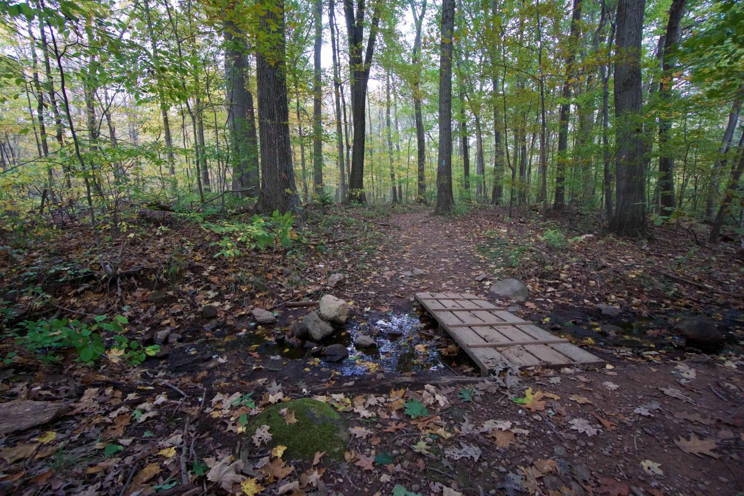 Risley Pond Trail Crossing