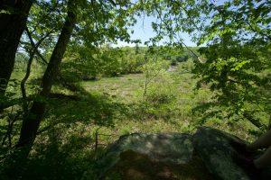 Selden Creek Blue Overlook