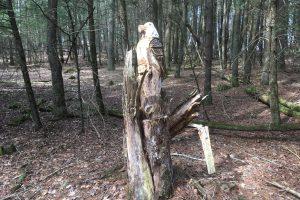 Sprague Fairy Trail