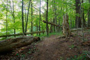 Torrey Preserve Trail Start
