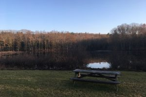 View of Unnamed Pond at Mount Hope Park