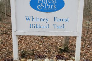 Whitney Forest Trailhead