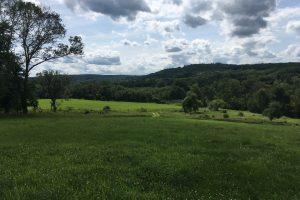 Alfalfa Hill at Bafflin Sanctuary