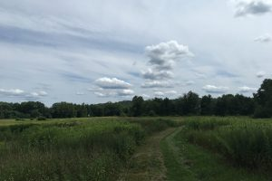 Mashamoquet Meadow at Bafflin Sanctuary