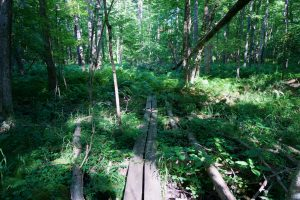 Sherman Forest Trail