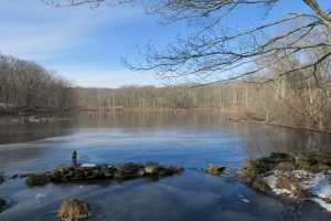 Teale Beaver Pond