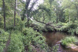 Trail along Little River