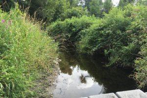 Wappoquia Brook at Bafflin