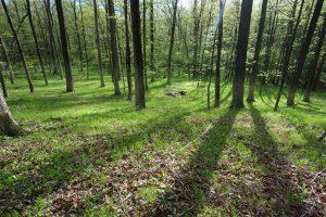 Julia's Trail at Fenton Ruby