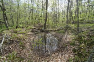 Pomeroy State Park Vernal