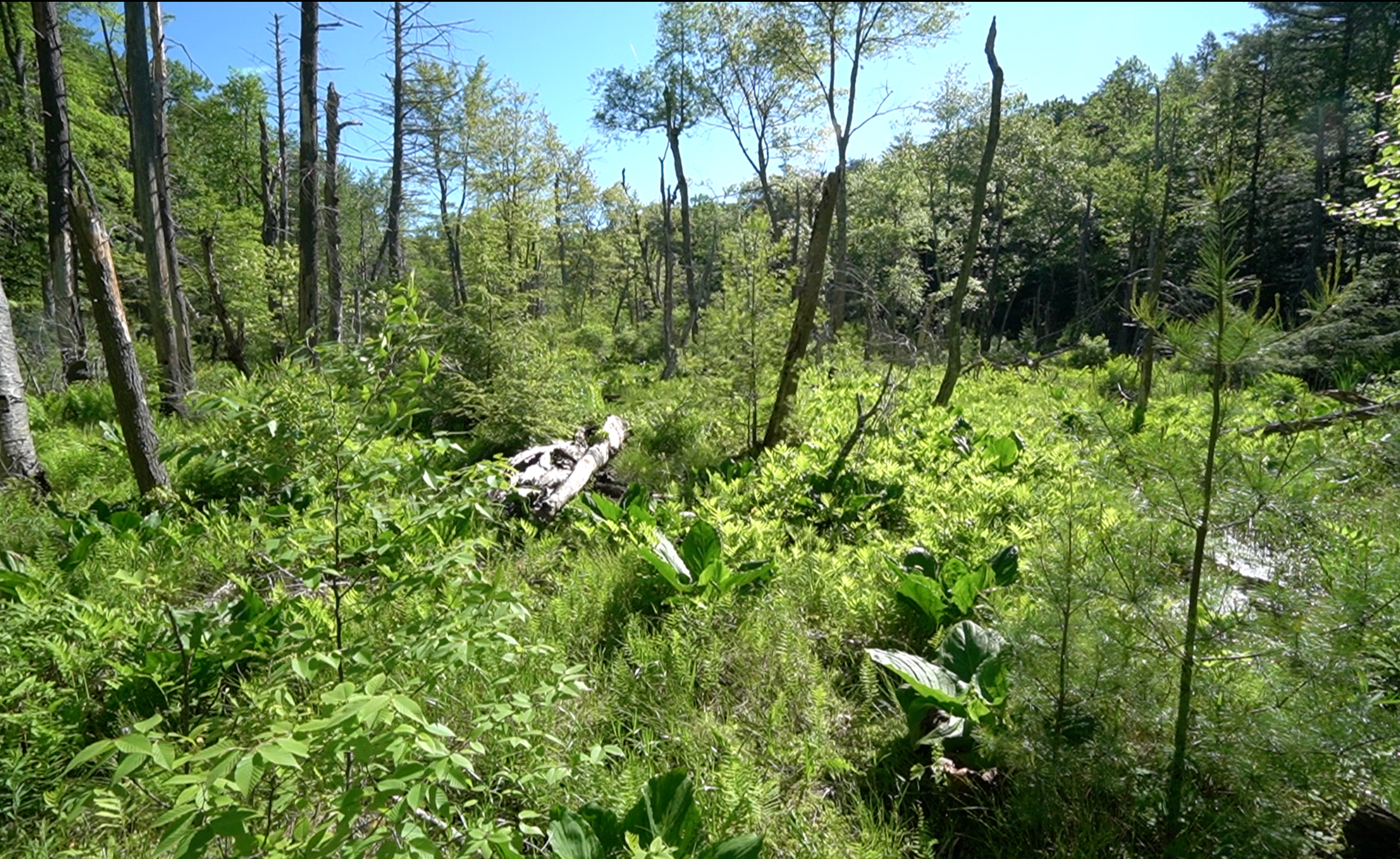 Walker Mountain Marsh