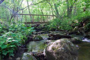 Bridge King to Nedwied