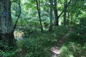 Heron Cove Trail