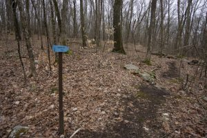 Friedman Forest Blue Trail