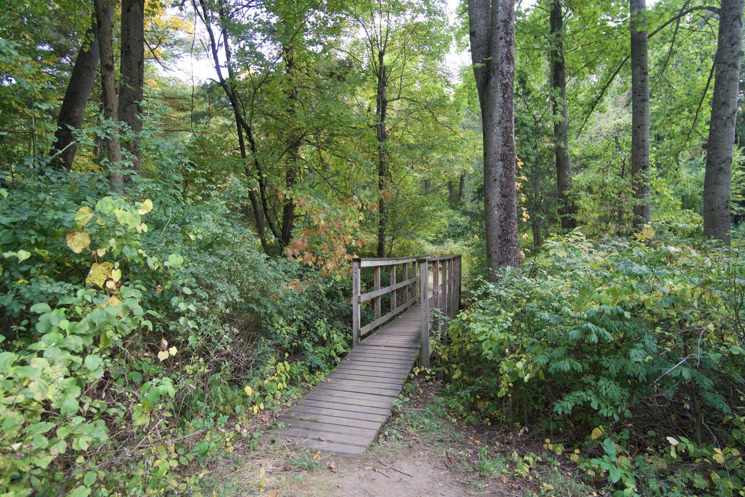 Whitaker Woods Stream Bridge