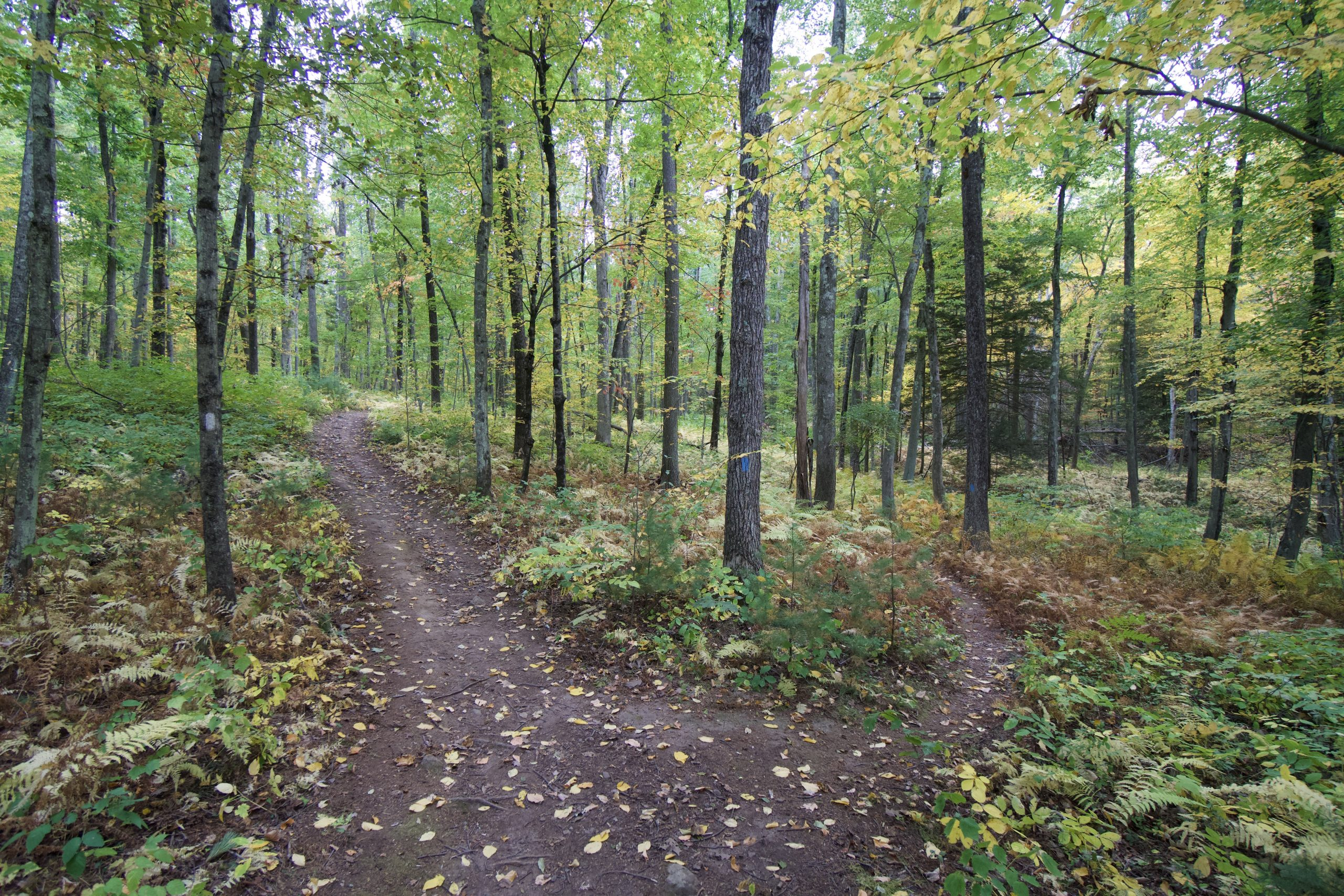 Whitaker Woods Trail